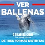 Tenerife: Ver ballenas de tres formas distintas