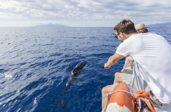 Avistamiento de Cetaceos en Tenerife