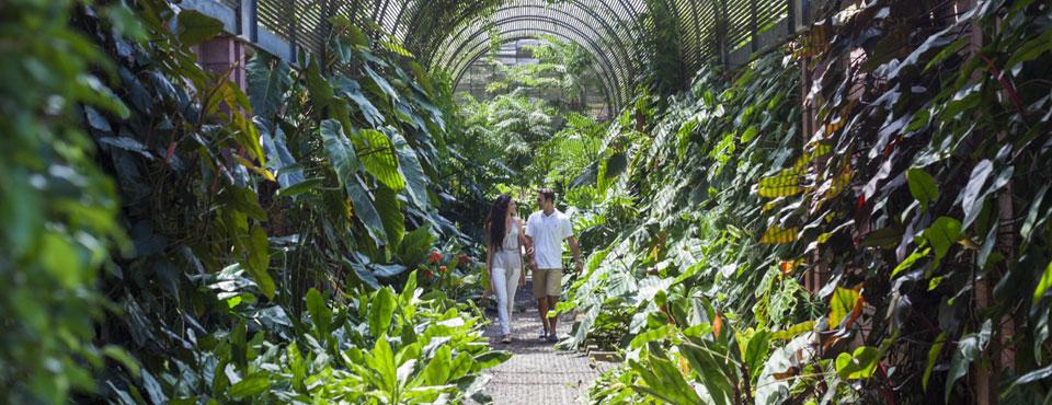 Puerto de la Cruz: Que hacer - Jardín Botánico