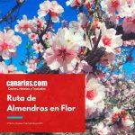 Ruta de Almendros en Flor – Tenerife
