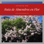 Ruta de los almendros en Flor en Santiago del Teide